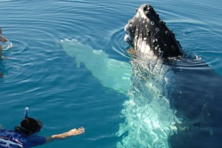... lovers able to take the plunge on immersive humpback encounters