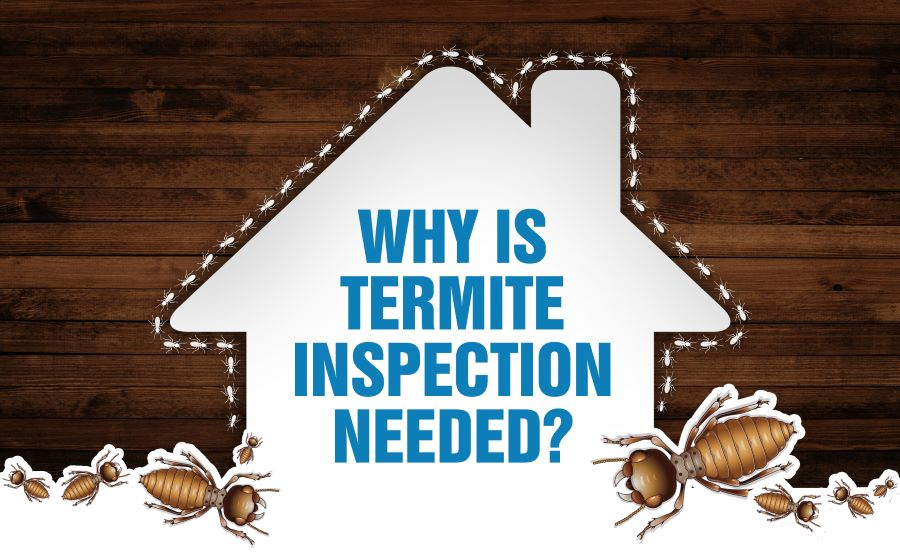 Why Is Termite Inspection Needed?